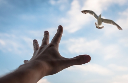 reverence:   Hand of a man reaching to bird in the sky  Selective focus on a hand
