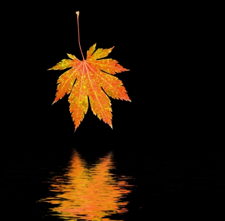 Orange maple leaf reflected in water