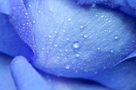 Water drop on blue petals photo
