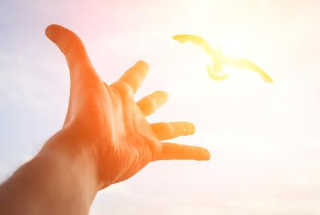 libertad: Mano de un hombre llegar al p�jaro en el cielo de enfoque selectivo en una mano