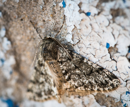 spreaded:   Moth resting on wall  Selective focus with shallow depth of field