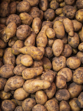 Raw dirty potatoes in market  Potatoes as background  photo