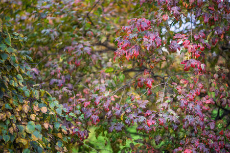 Branch with leaves in the autumn. Selective focus with shallow depth of field. photo