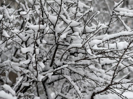 The snow-covered bushes in park. Selective focus. photo