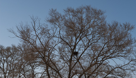 Tree branch silhouette with bird photo