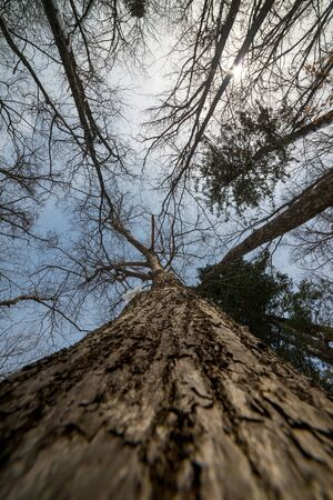 wide angle lens: Tree branches silhouette over sky. Winter. Wide angle lens.