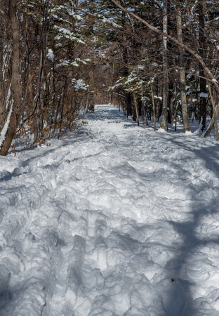 wide angle lens: In winter forest. Shot with wide angle lens. Stock Photo