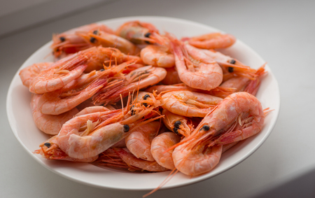 shrimp: Cooked shrimps on white plate. Selective focus with shallow depth of field. Stock Photo