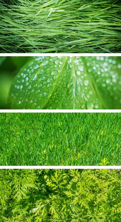 green leafs: Collection of horizontal banners - Green leafs. Stock Photo