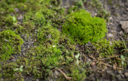 depth of field: Green moss background, selective focus with shallow depth of field.