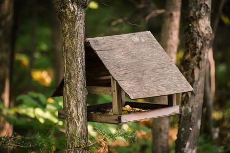 clavados: Alimentador de pájaros en el bosque de otoño.