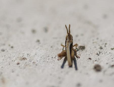 Small grasshopper. Selective focus with shallow depth of field. Standard-Bild