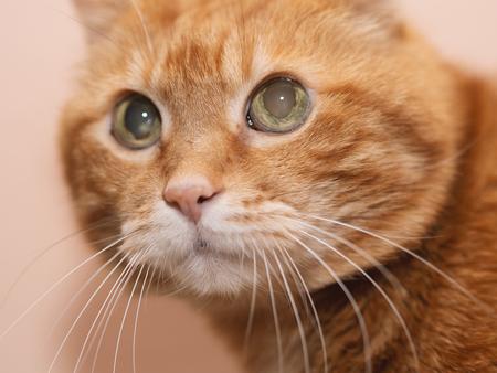 Lovely red cat. Soft focus. Foto de archivo