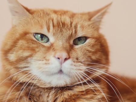 Sleepy red cat. Soft focus on eyes.