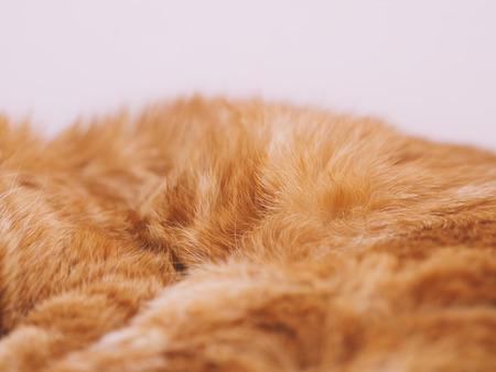 Lovely red cat. Selective focus. Foto de archivo