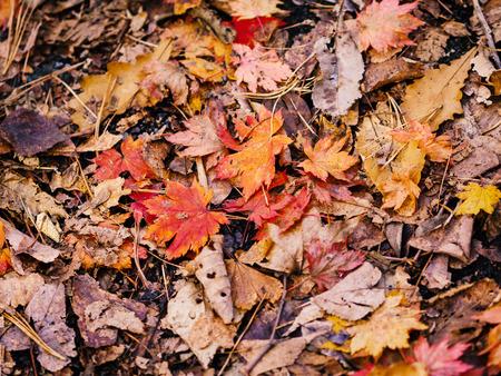 Autumn leaves closeup view - natural background. Фото со стока