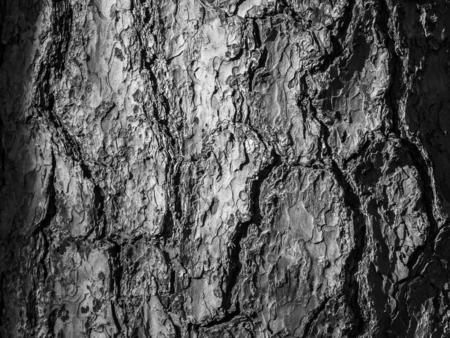 Tree bark texture closeup. Selective focus.