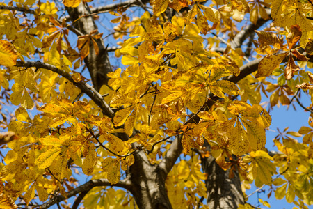 Autumn forest - beautiful yellow leaves. Shallow depth of field.