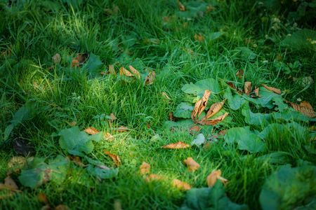 Autumn leaves closeup view - natural background. Shallow depth field.