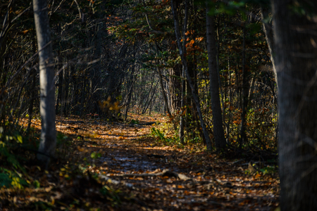 Autumn in forest - mysterious alley.
