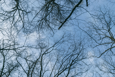 Tree branch silhouette over blue sky background. Фото со стока