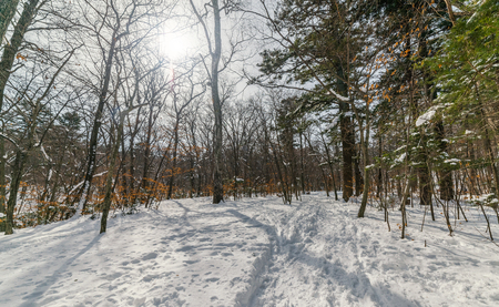 In winter forest at sunny day.