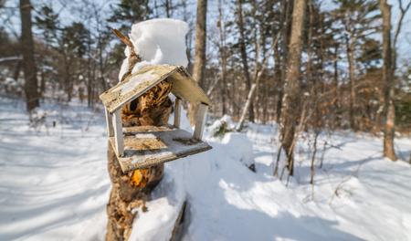 Bird feeder in the winter forest. Фото со стока