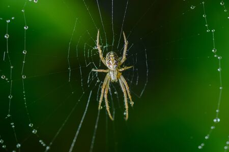 Small spider sits on his cobweb. Selective focus with shallow depth of field.