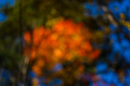 In the autumn forest. Abstract circular bokeh background.