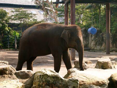타 롱가 동물원의 코끼리 스톡 콘텐츠