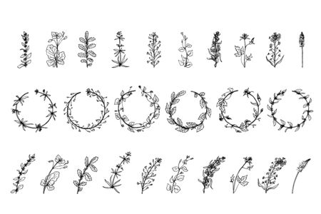 Wild herbs, drawn by a black line on a white background. Ilustracja