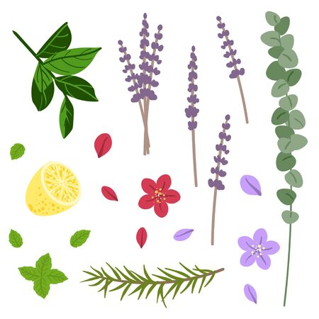Set of aromatic plants. Flowers and leaves. Vector.