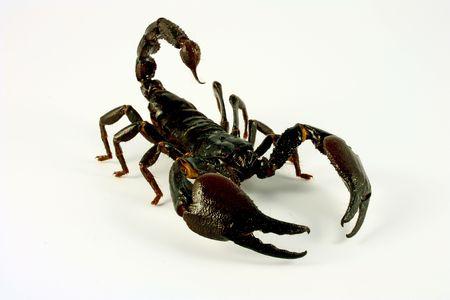 scorpion: Scorpion analyse en position de combattre