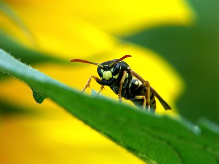 paper wasp: Close-up view of insects on leaves Stock Photo