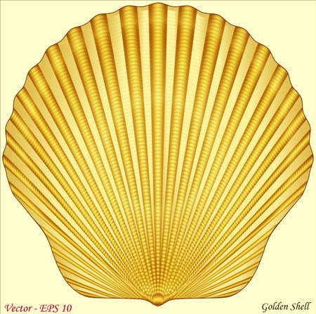 scallops: Golden Shell Illustration