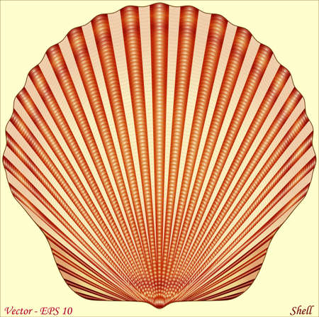 Seashell  イラスト・ベクター素材