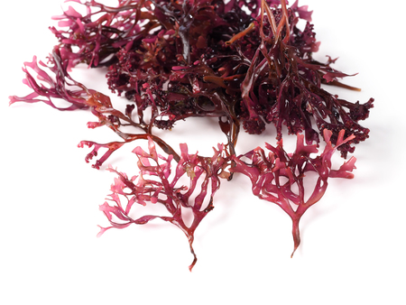 Musgo Estrellado – False Irish Moss -  Carrageen Moss  Binomial name: Mastocarpus stellatus. It is a sea vegetable or edible seaweed, ideal in preparing salads, marinades and sauces. Banque d'images