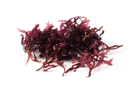 Musgo Estrellado – False Irish Moss -  Carrageen Moss  Binomial name: Mastocarpus stellatus. It is a sea vegetable or edible seaweed, ideal in preparing salads, marinades and sauces. 版權商用圖片