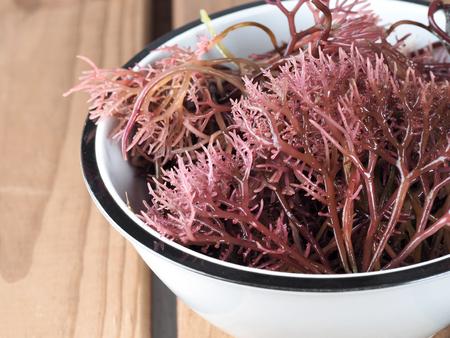 Gigartina Pistillata Essbarer roter Seetang in der Familie Gigartina. Binomialname: Gigartina Pistillata.