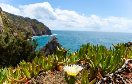 Yellow flower on the Cabo da Roca Stock Photo