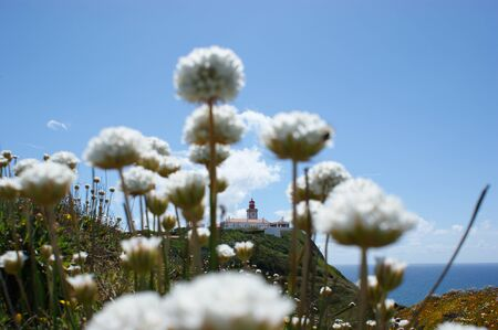 roca: The most western lighthouse in Europe among white flowers, Cabo da Roca Portugal