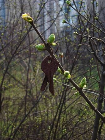 forgotten: The forgotten keys on the spring branch