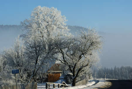 snowbound: snowbound trees in village situated in carpathian mountains