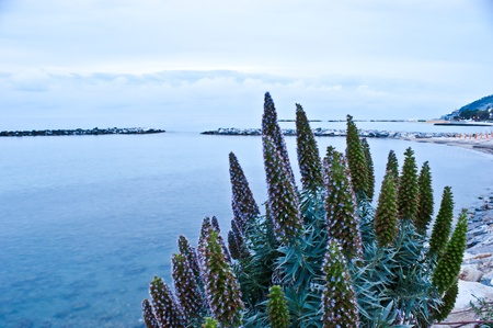 sanremo: the scenic evening on Ligurian sea in Sanremo, Italy.