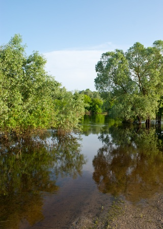 rains: the river burst its banks and trees stand in water after heavy snows and rains, Ukraine