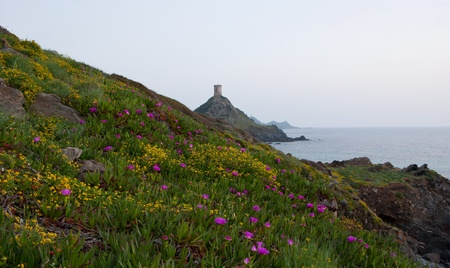 The evening view on Sanguinaires islands with beautiful flowers of Parata cape, Corsica