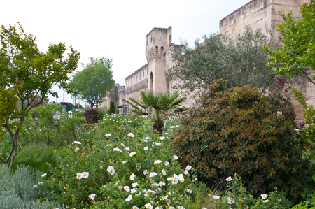 rampart: The beautiful green garden with the rampart of Avignon on the background Stock Photo