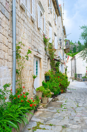 The narrow medieval backstreet decorated with many plants in pots, Perast, Montenegro.