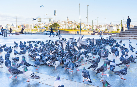 cami: ISTANBUL, TURKEY - JANUARY 13, 2015: The flock of pigeons eating grains next to Yeni Cami mosque, on January 13 in Istanbul.