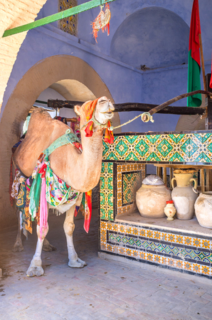 kairouan: KAIROUAN, TUNISIA - AUGUST 30, 2015: The camel turns the wheel to draw water from the well in Bir Barouta, that is connected wit Zem-Zem spring in Mecca, on August 30 in Kairouan. Editorial